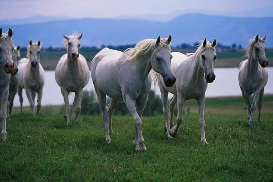 Horse | 馬 | Ngựa Photos-of-Horses