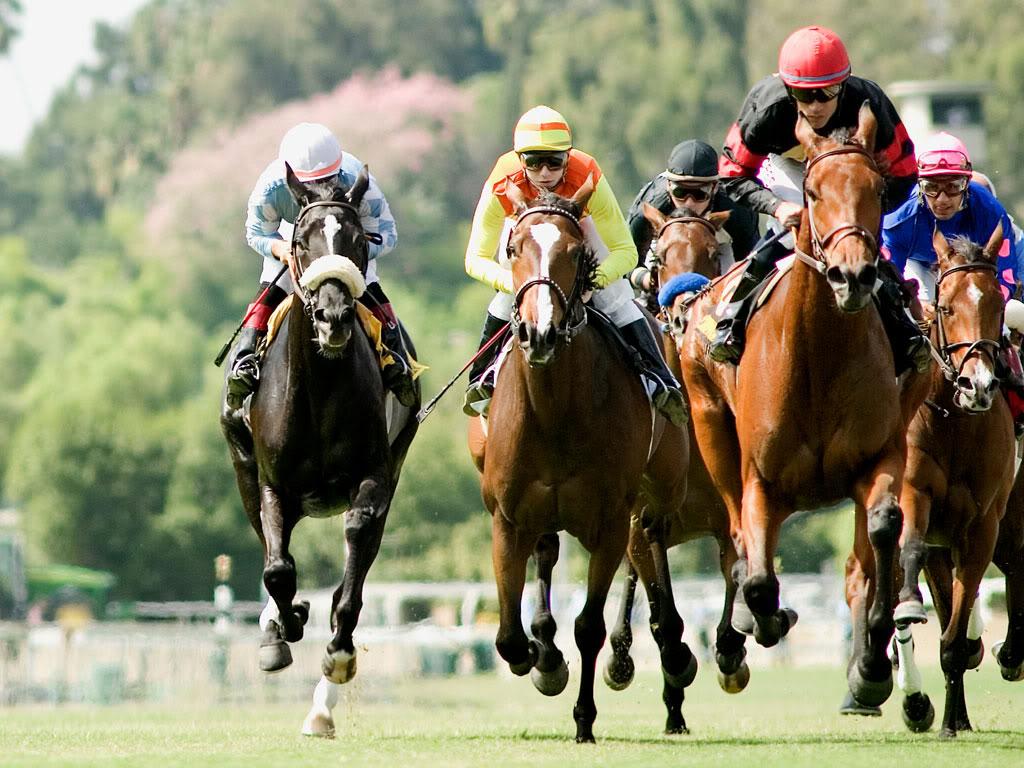 Horse | 馬 | Ngựa Stretchrun_Horse_Racing_Wallpaper