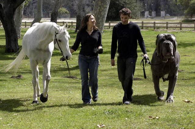 Horse | 馬 | Ngựa World_Biggest_Dog