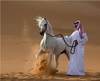 Horse | 馬 | Ngựa Arabian-horse2
