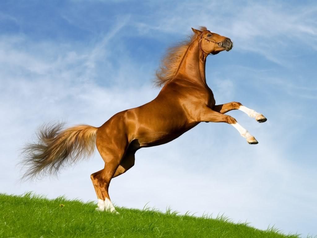 Horse | 馬 | Ngựa Bavarian_chesnut_horse_1981892983