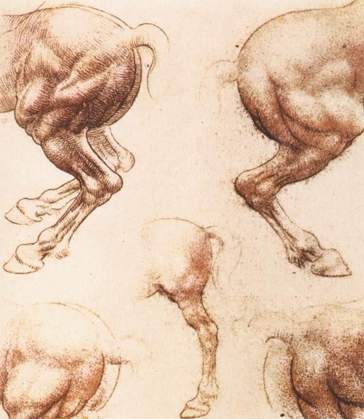 Horse | 馬 | Ngựa 12787-study-of-horses-leonardo-da-vinci
