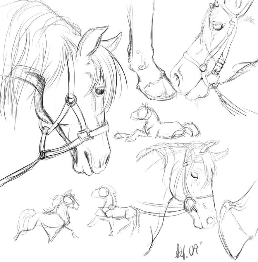 Horse | 馬 | Ngựa Horse_sketches_by_nightspiritwing