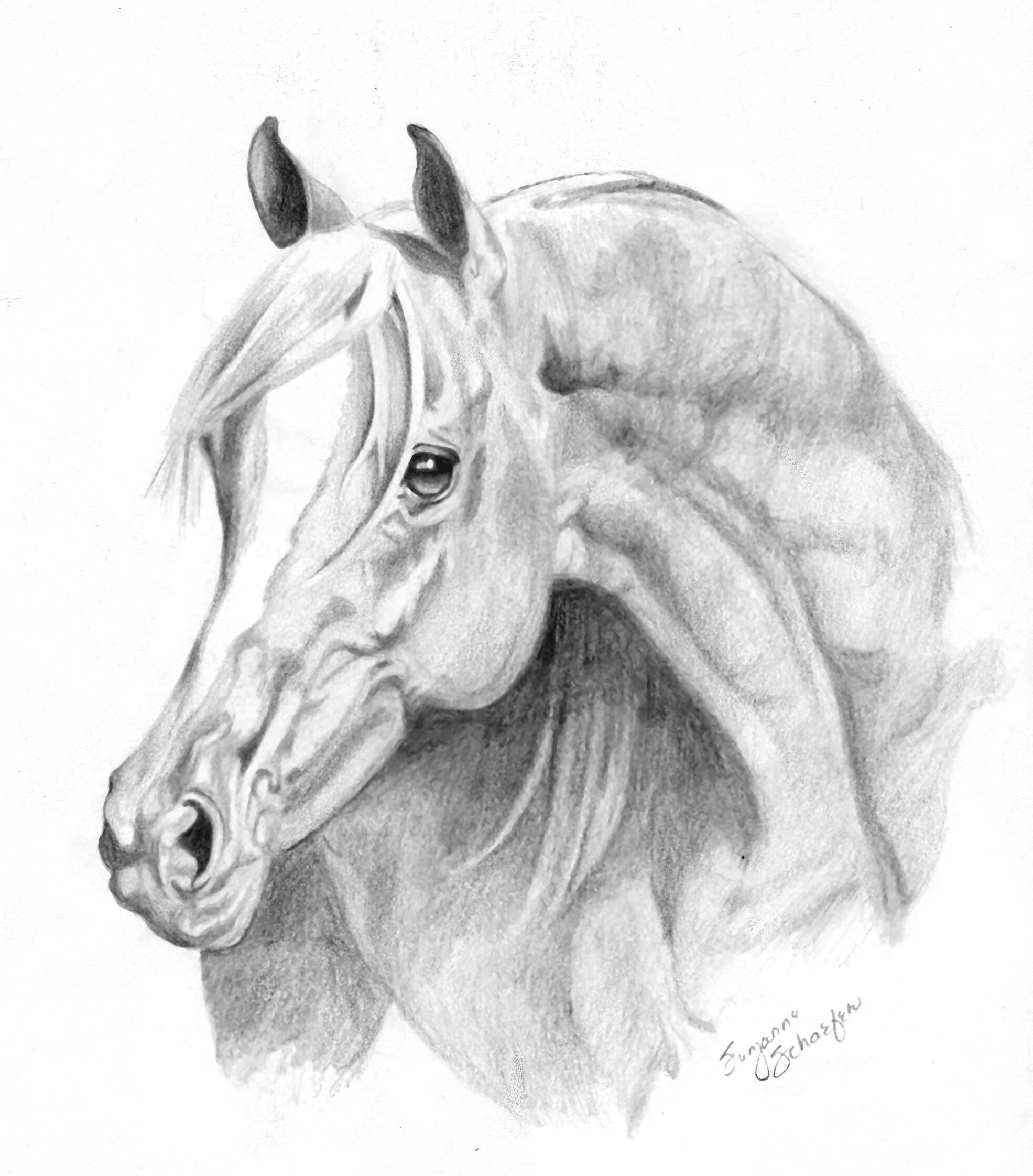 Horse | 馬 | Ngựa Arab-stallion1