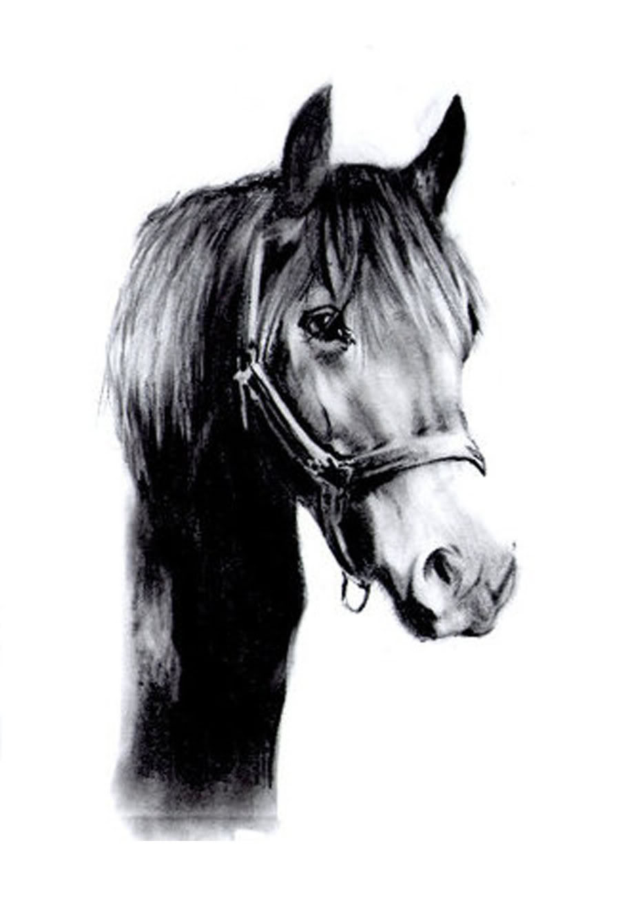 Horse | 馬 | Ngựa Black_horse_drawing_by_slippy88-d2xjvnp