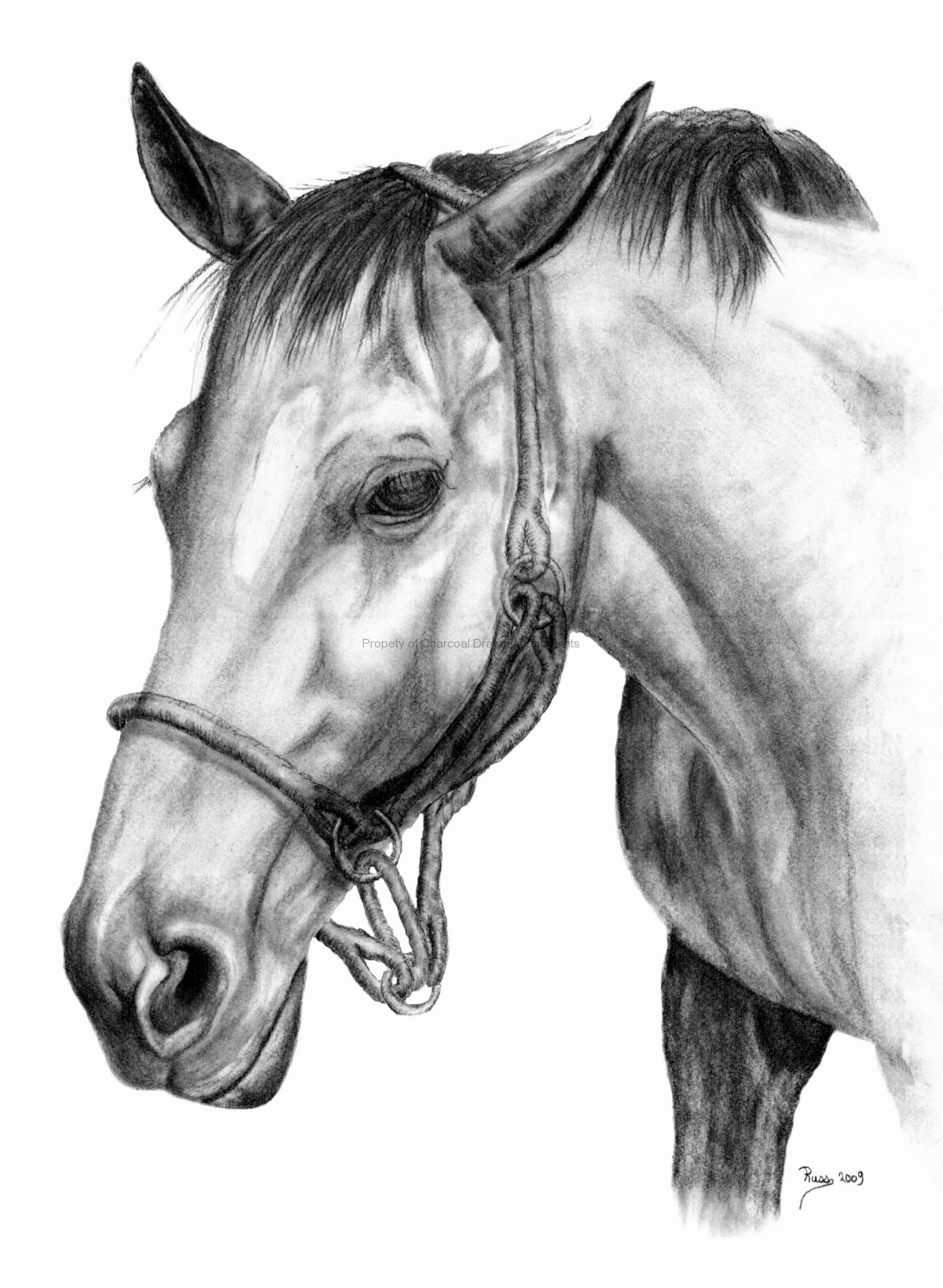 Horse | 馬 | Ngựa Horse-portrait-drawing