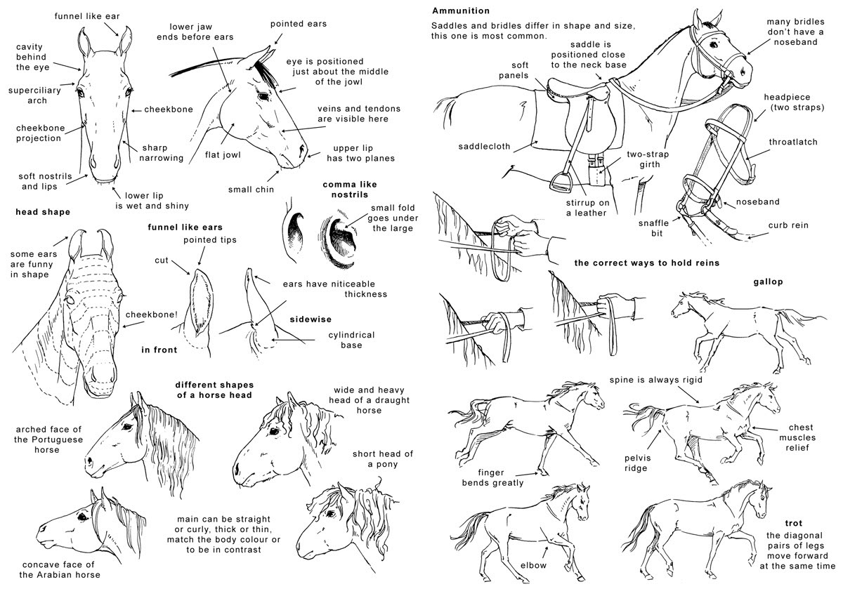 Horse | 馬 | Ngựa How_to_draw_the_horse_2___Eng_by_Elruu