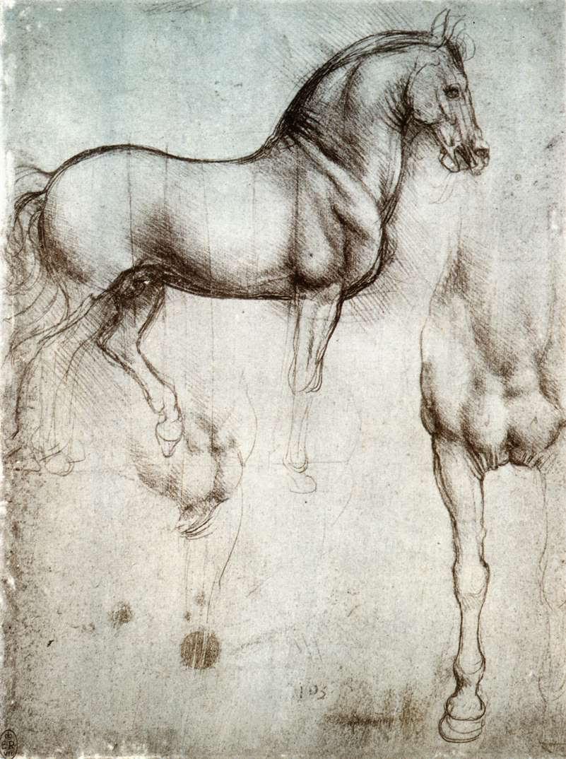Horse | 馬 | Ngựa Wgart_-art-l-leonardo-11nature-11horse1