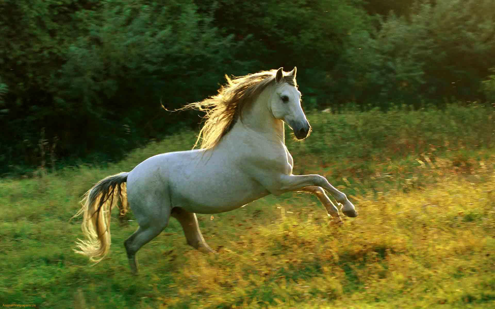 Horse | 馬 | Ngựa Horse_0