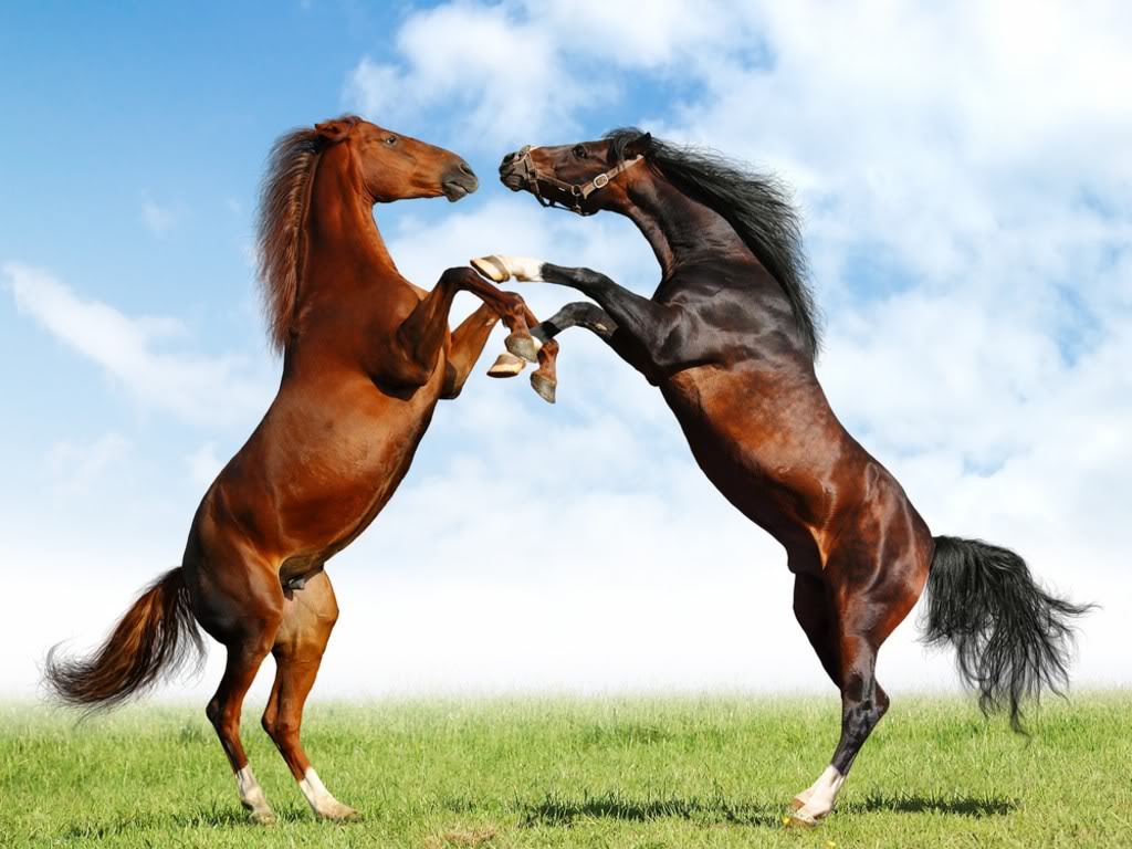 Horse | 馬 | Ngựa Horse_10_212689715