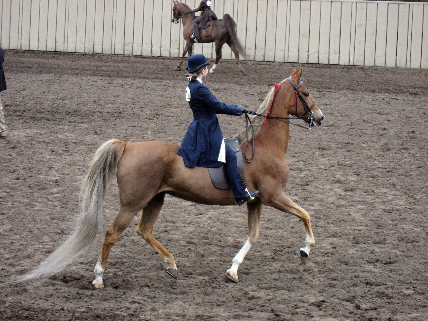 Horse | 馬 | Ngựa P47b_monterey_horse_show_melanie