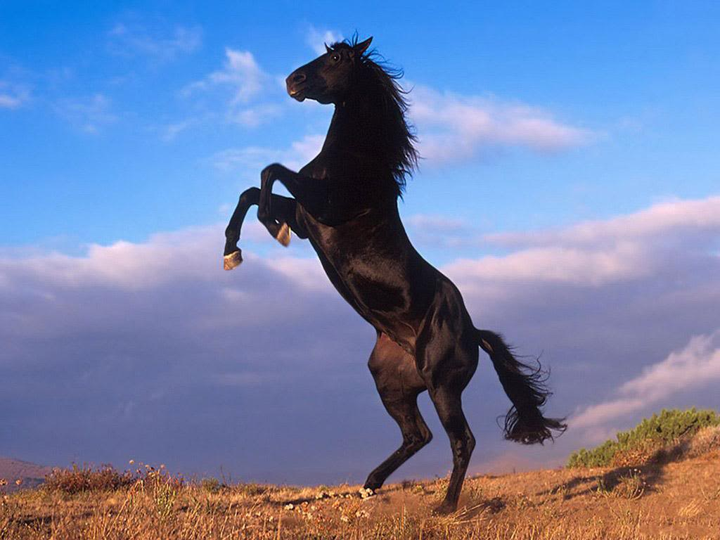 Horse | 馬 | Ngựa Rising-horse-wallpapers_12851_1024x768