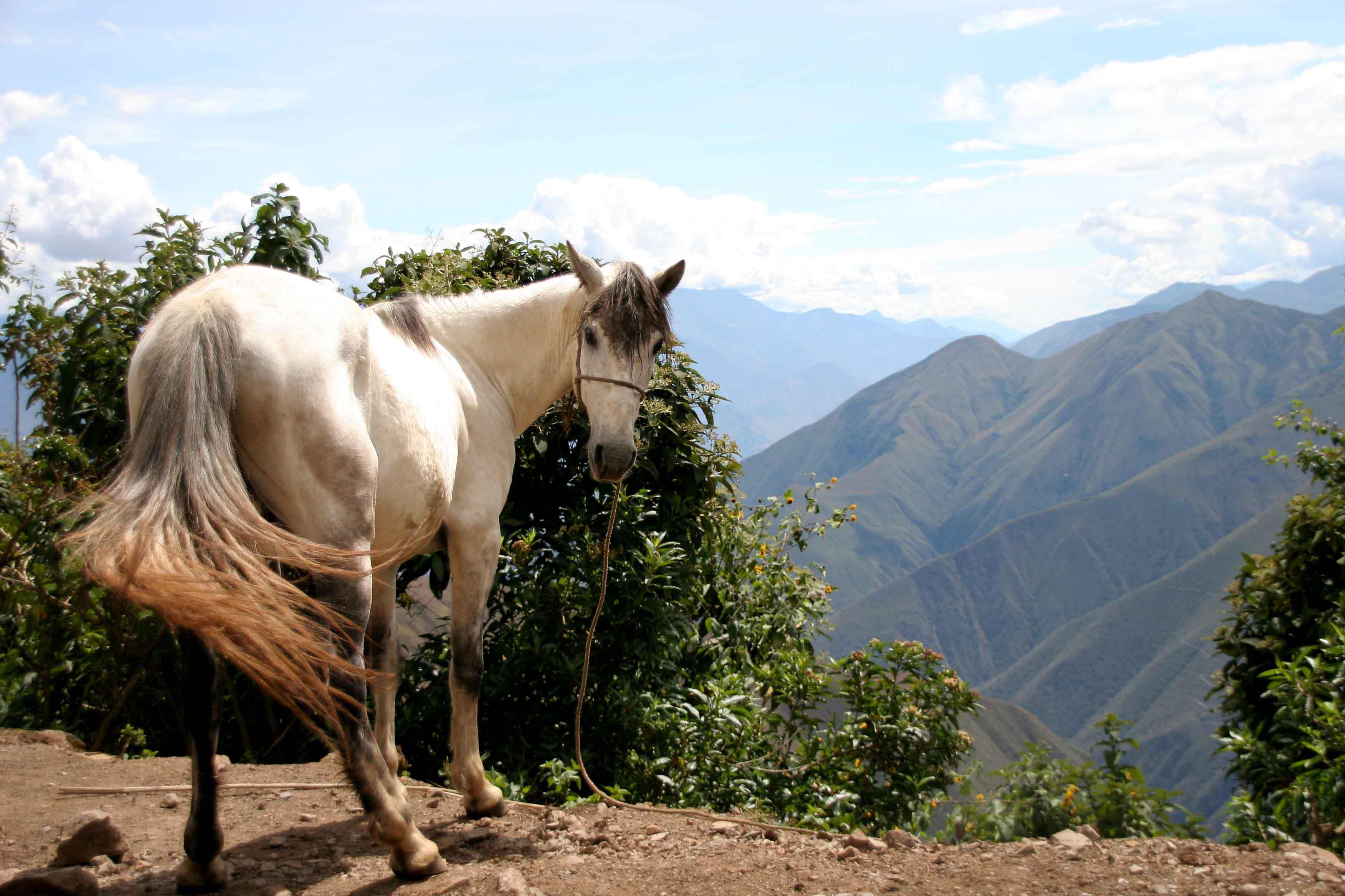 Horse | 馬 | Ngựa Sm-08-3895-white-horse-at-chanchillo