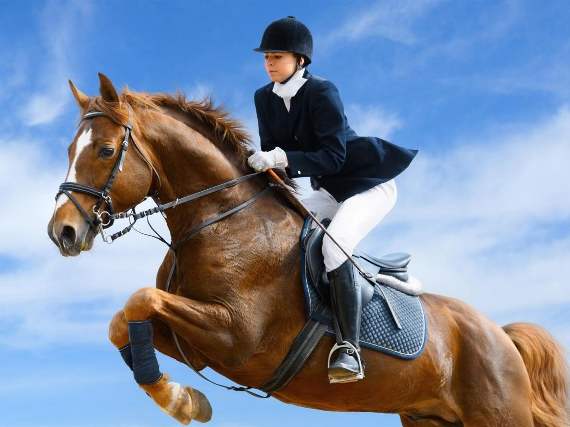 Horse | 馬 | Ngựa Super_horse_46589-1152x864