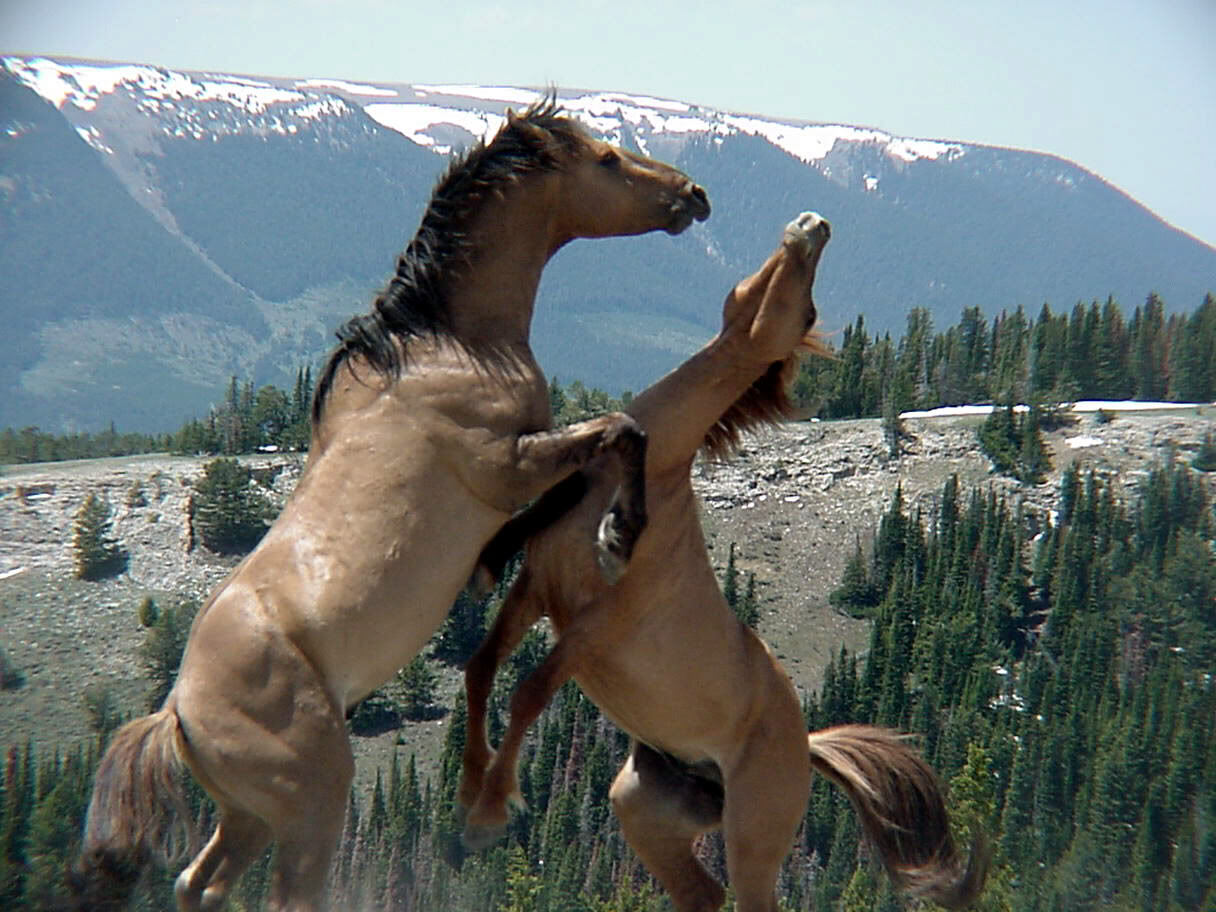 Horse | 馬 | Ngựa Wild-horse