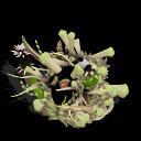 Pack de plantas vs zombies (nivel 3) Tanglekelp