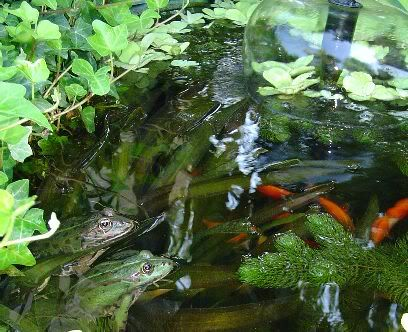 Žabe Par