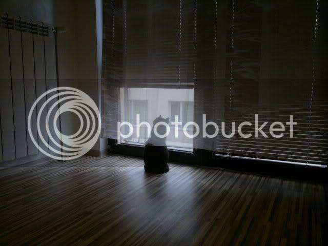 Снимки от Nokia N8 19032011078