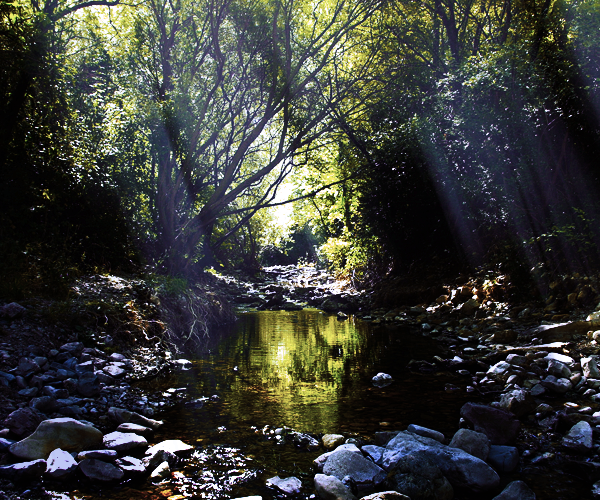 Claro del Río Bosque_zps7583f139