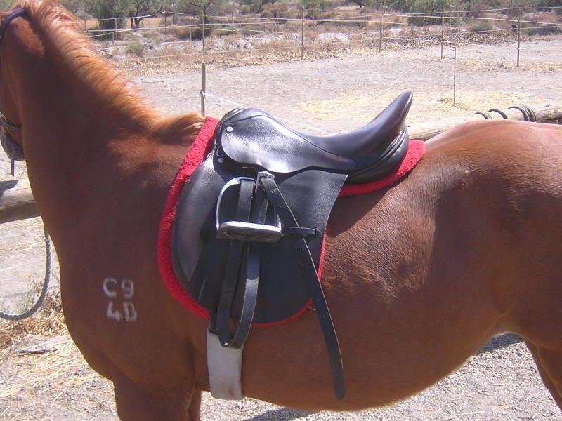 English GP saddle for sale. DSCN3703