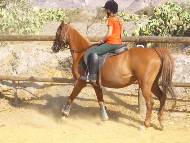 Beautiful chestnut mare for sale. IMG_0337
