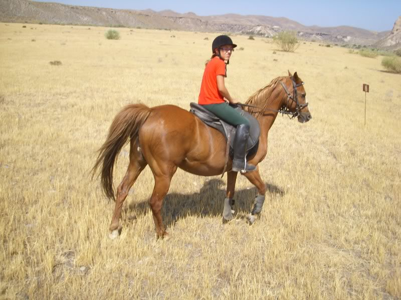 Beautiful chestnut mare for sale. Resized4