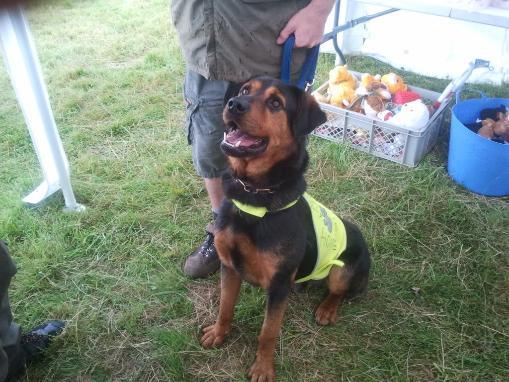 Jason, Rottie/gsd x homed 023