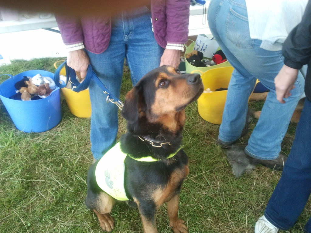 Jason, Rottie/gsd x homed 027