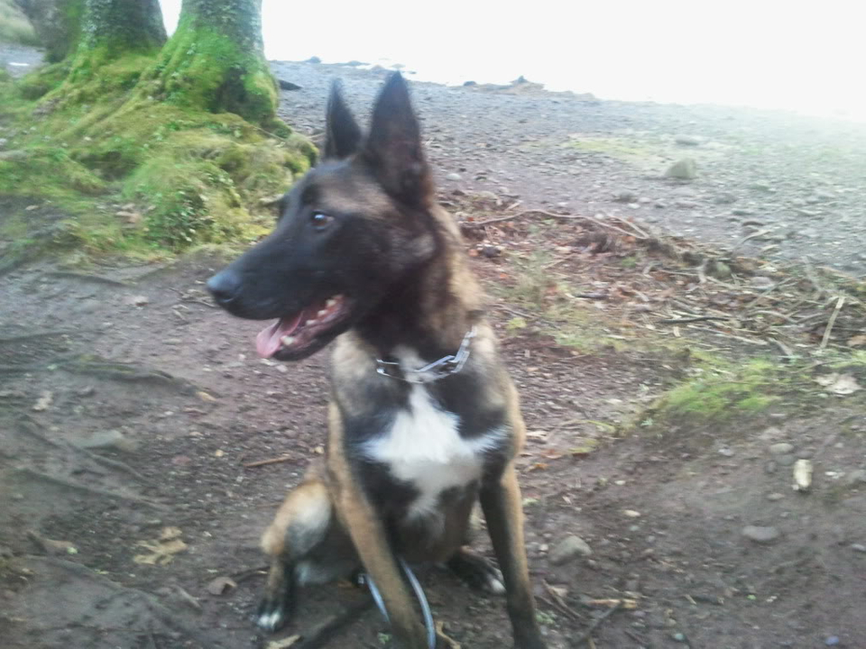 Janice approx 22 months Homed 2011-12-03083609