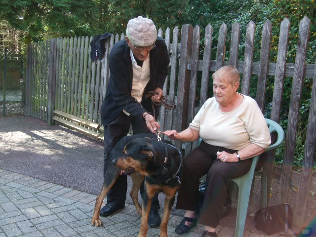 Jason, Rottie/gsd x homed DSCF7618
