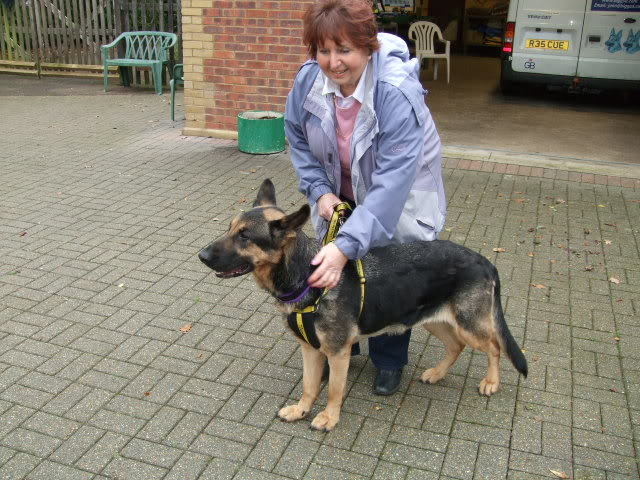 Keisha 3yr old looking for a better life homed DSCF7960