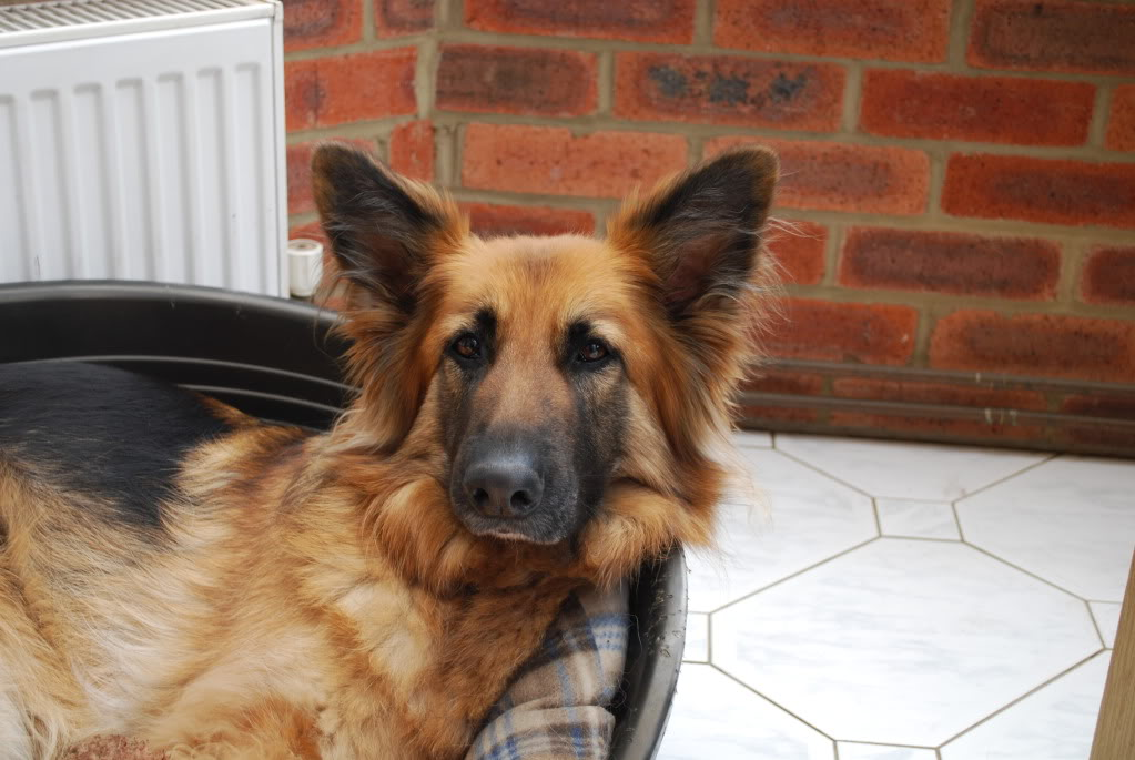 Tara Approx 7yrs old needs foster/home? DSC_0011