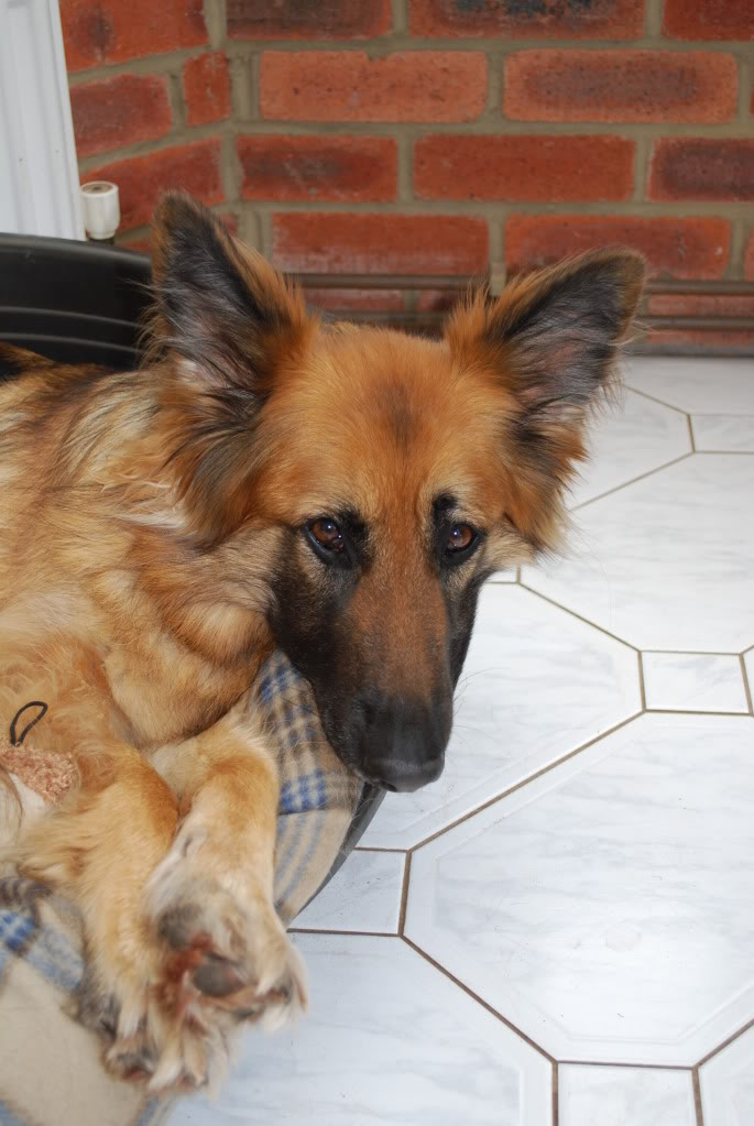 Tara Approx 7yrs old needs foster/home? DSC_0012