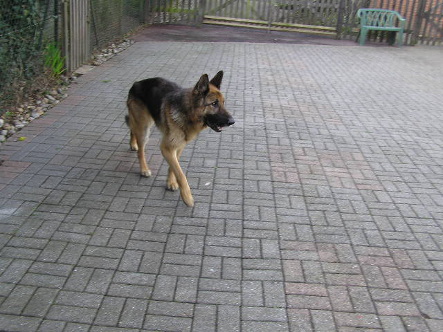 Alfred 2/3 yr old homed P1010005-6