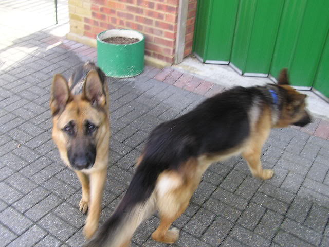 Alfred 2/3 yr old homed P1010005-7