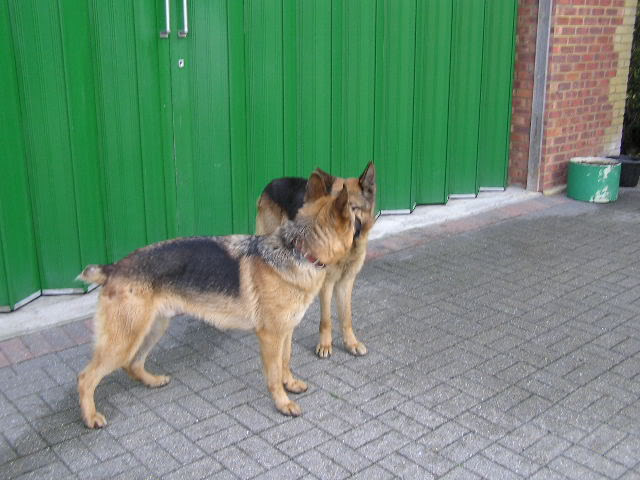 Alfred 2/3 yr old homed P1010010-5