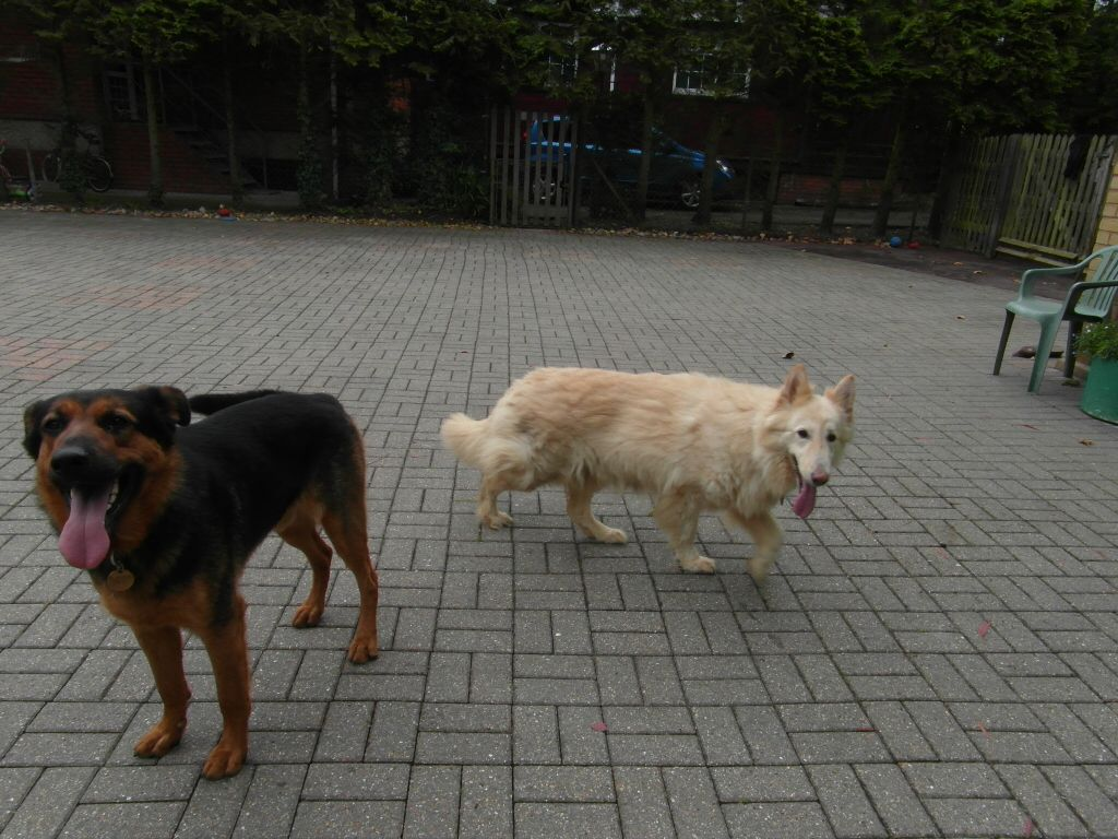 Lucy - 5 years old white female finally homed SAM_1139