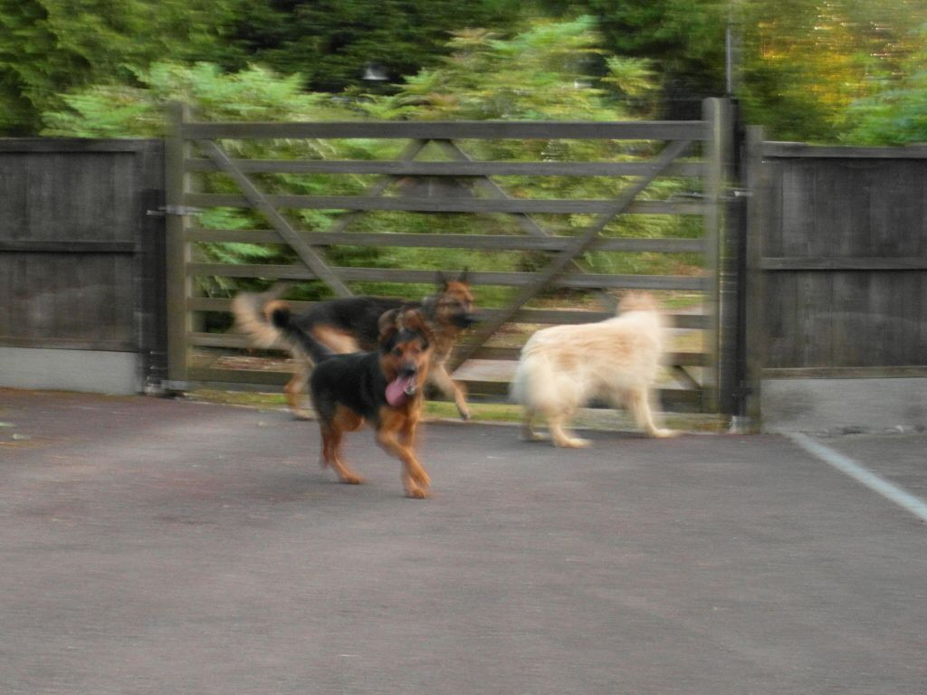 Alfred 2/3 yr old homed SAM_1149