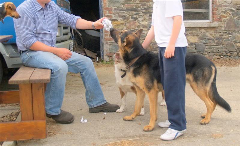 Duke 5/6yr old boy Homed Duke-2008Medium