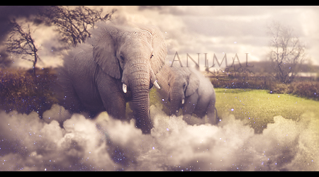Animal Kingdom tag Animalkingdom