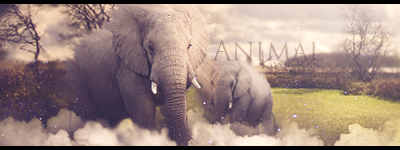 Animal Kingdom tag Animalkingdom2