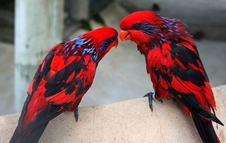 #045 Glitterhold Parrot GlitterholdParrots