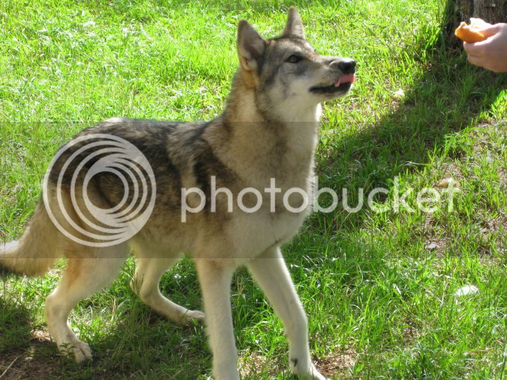 Post Your Pet Pics! OcalaFlVisit030