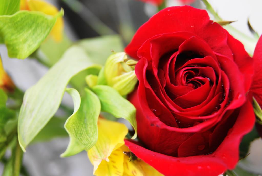 love rose flower DSC02084