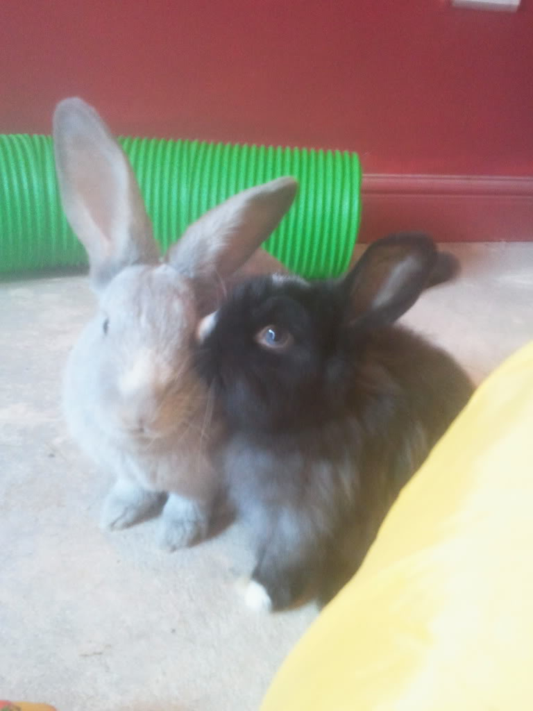 My Buns in a Million - Willow and Mr Mo 2012-11-04104259