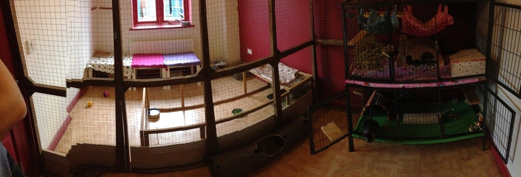 The New Animal Room Setup Image_zpsixlkihyb