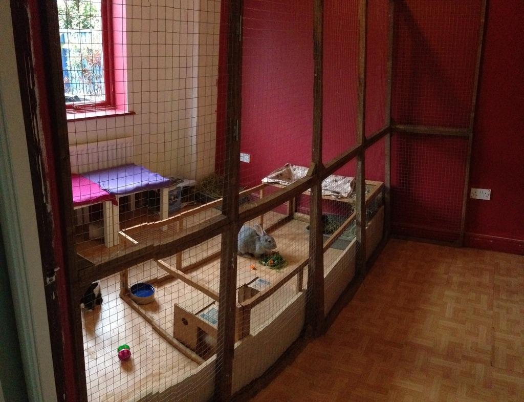 The New Animal Room Setup Image_zpsrermg2ug