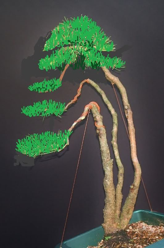 scotts pine raw material - have a virtual play 001531x800virt