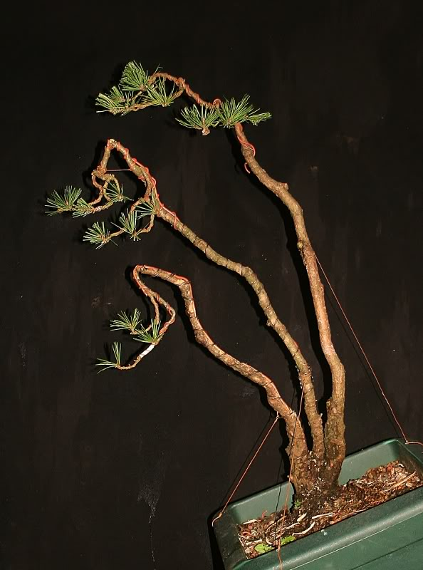 scotts pine raw material - have a virtual play 002594x800