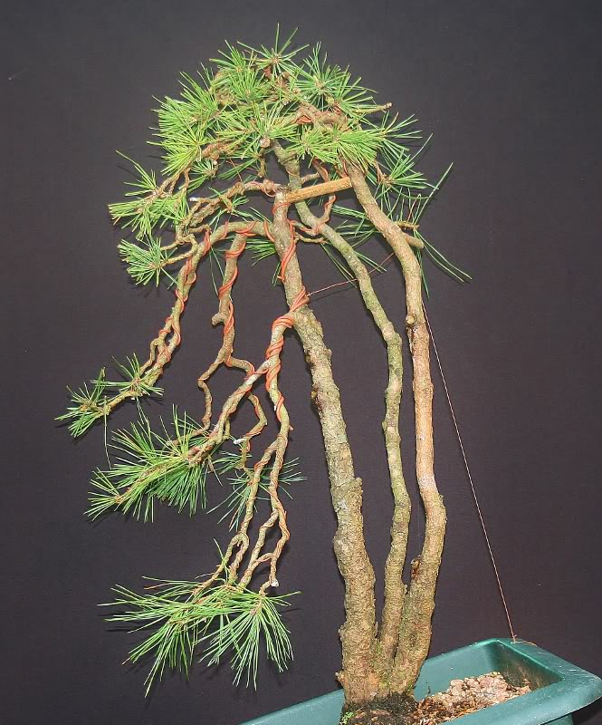 scotts pine raw material - have a virtual play 010665x800